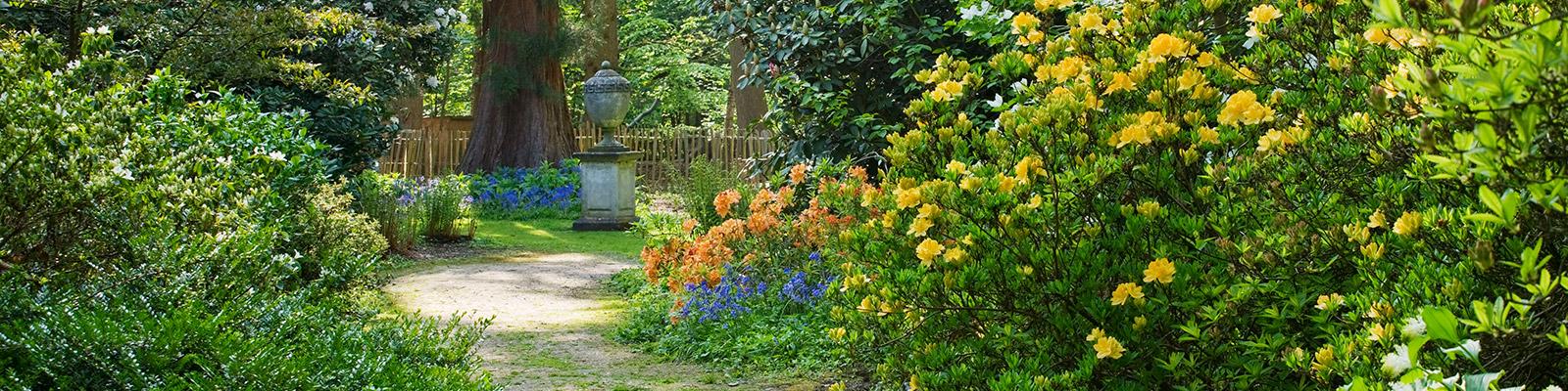 Doddington Place Gardens - Woodland Garden