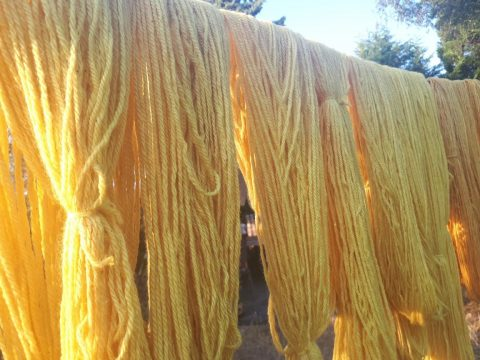 Wool dyed with daffodil heads for Baby Bliss blankets