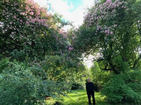 Maurice Foster in his remarkable garden