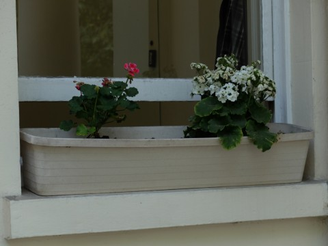 This is a good example of how dismal and dreary a window box can look.  Poor plants don't you think to meet such a sad fate?
