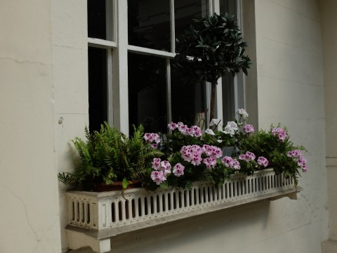 Someone has had fun choosing the different plant for this window box.  The dwarf bay tree adds a whimsical touch.