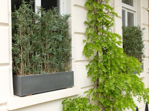 A chic use of bamboo used as an alternative to net curtains, or frosted glass.  A contemporary solution to the age old problem of snoopers peering into other people's homes.
