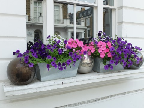 This is the most original example of window dressing that I encountered.  The shiny metallic balls add a dash of glamour and a smooth contrast to the sprawling petunias.  Note the sleek modern containers.