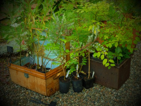 Antique tin trunks make brimming with plants.
