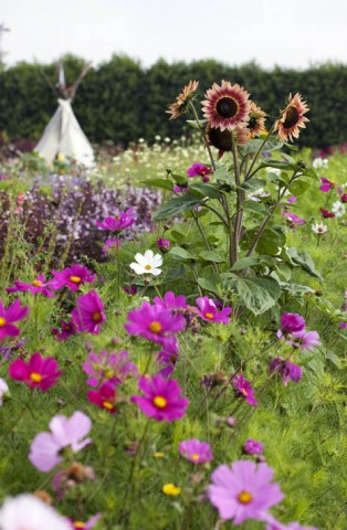 Don't you just want to pick these cosmos and dahlias and take them home with you?
