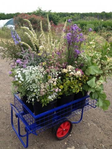 Trolley of flowers