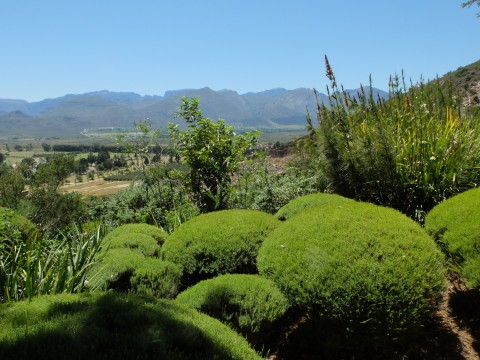 The clipped bushes heighten the contrast between the rugged landscape and the tamed garden.