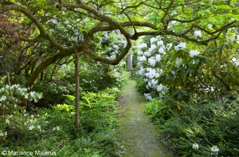 A path in the woodland garden at Doddington Place, Kent.
