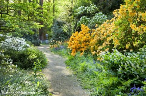 The woodland garden at Doddington Place, Kent.