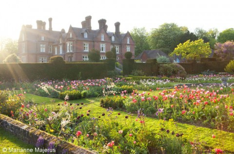 Evening sun across tulip patterre, view to house at Doddington Place, Kent.