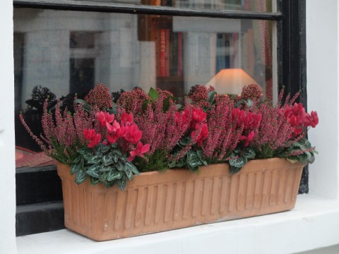 A good try at being a bit quirky using a mixture of skimmia, cyclamen and heather.