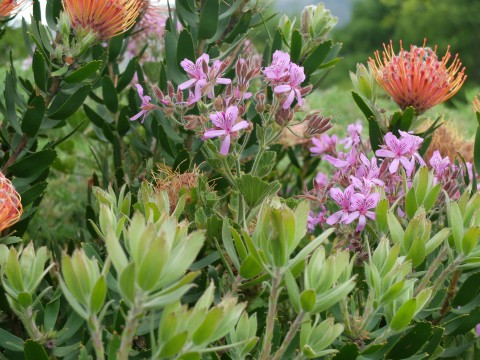 A jolly medley of South African blooms.