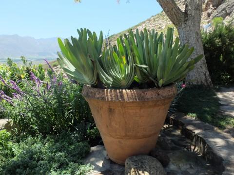 A haven for succulents.