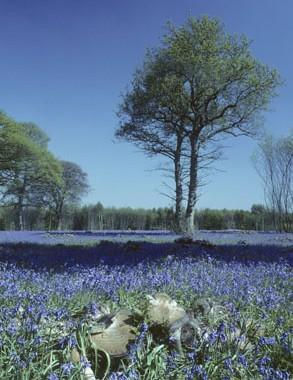 Doddington Place Gardens -  - Faversham, Sittingbourne, Kent