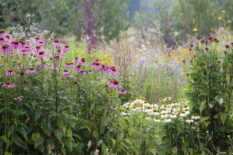A splendid array of flowers waiting to be picked at Blooming Green.