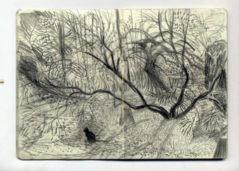 Picture drawn by Rosie Maccurrach.