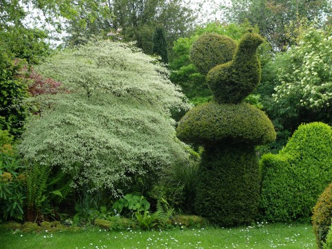 An example of Charlotte's prowess at sculpting topiary.