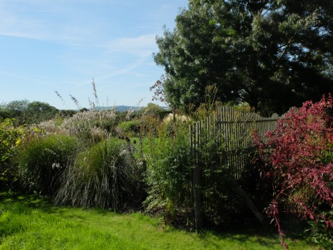 Looking across the garden to the South Downs.