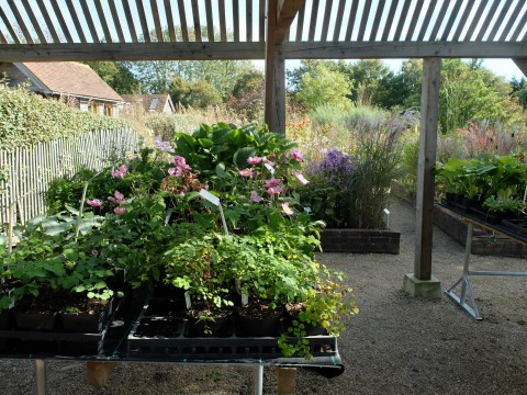 A glimpse of the superbly well tended plants all grown on site by Graham Gough at Marchants Nursery.