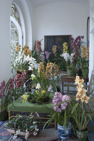 A thrilling grouping of exotic orchids from McBean's established in 1879.