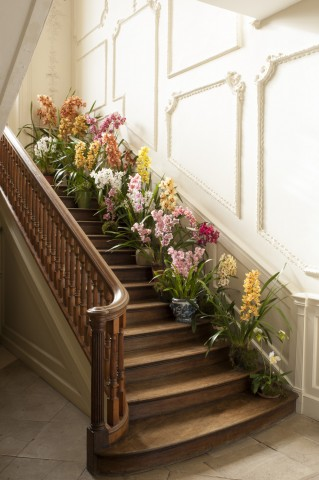A fine display of McBean's breathtaking orchids.
