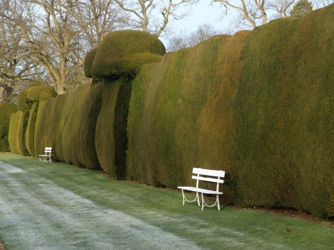 More yew hedges.