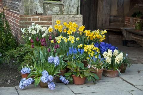 Spring Bulbs at Great Dixter