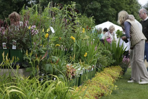 The lure of a fine herbaceous border.