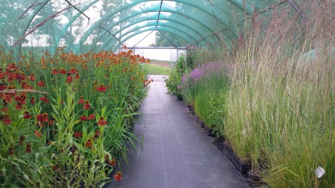 A polytunnel bursting with healthy plants