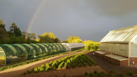 Arvensis Wholesale plant nursery