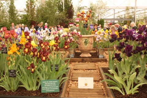 Richard Cayeux's stand at Chelsea Flower Show.