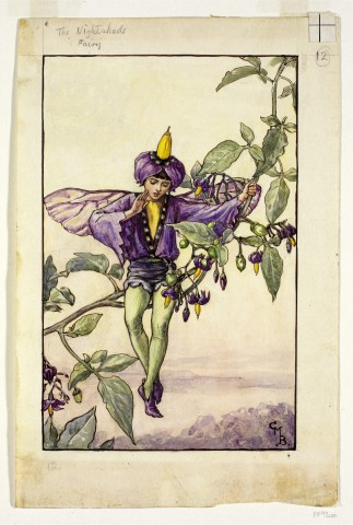 The Nightshade Fairy © The Estate of Cicley Mary Barker 1925