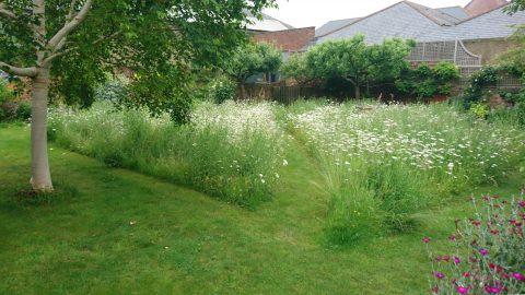 wildflower meadow in Abbey Street