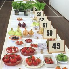Vegetables at a horticultural show