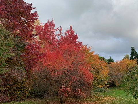 The arboretum showing off its wonderful autumn colours